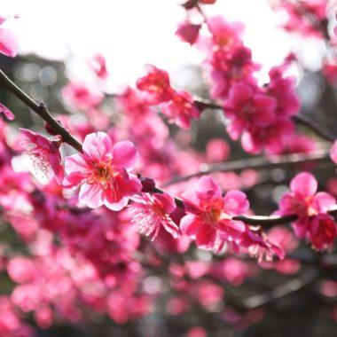 15 Japan foto's waardoor je er meteen naartoe wilt!