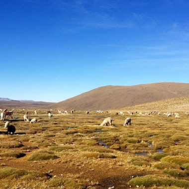 Reisroute: Peru's highlights in vier weken