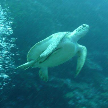 Celebes: Paradijselijke onderwaterwereld en ongerepte natuur in Noord Sulawesi