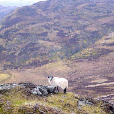 De Schotse hooglanden: puur natuur in Schotland