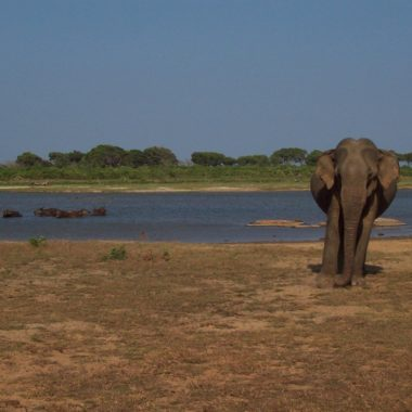 Sri Lanka: parel van de Indische oceaan