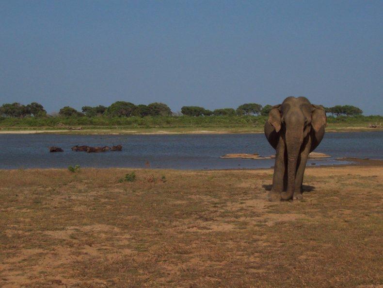 Sri-Lanka-Yala-NP -olifant