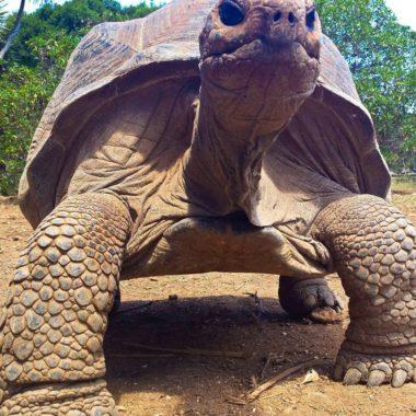 Het best bewaarde geheim van Mauritius: Rodrigues eiland