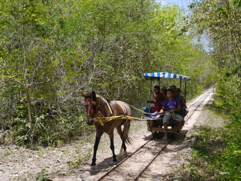 cuzuma-cenote-paard