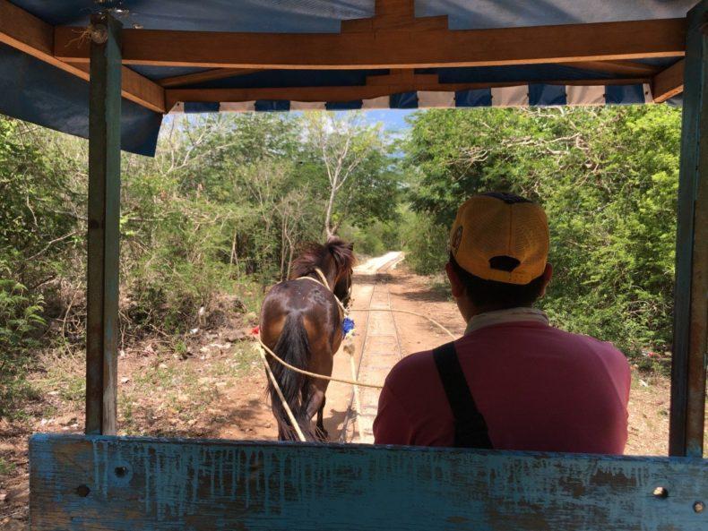 cuzuma-paard-cenote