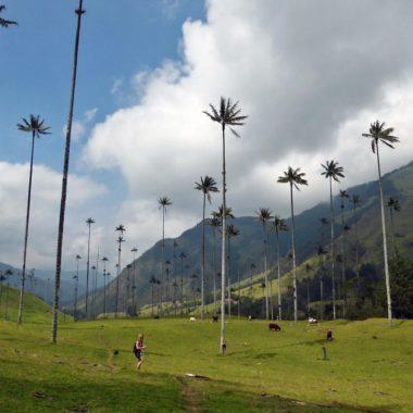 Salento en de indrukwekkende Valle de Cocora in Colombia