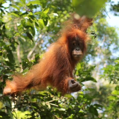Reisroute: Sumatra van Noord naar West