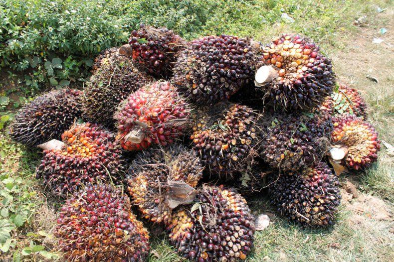 indonesie-sumatra-palm-oli