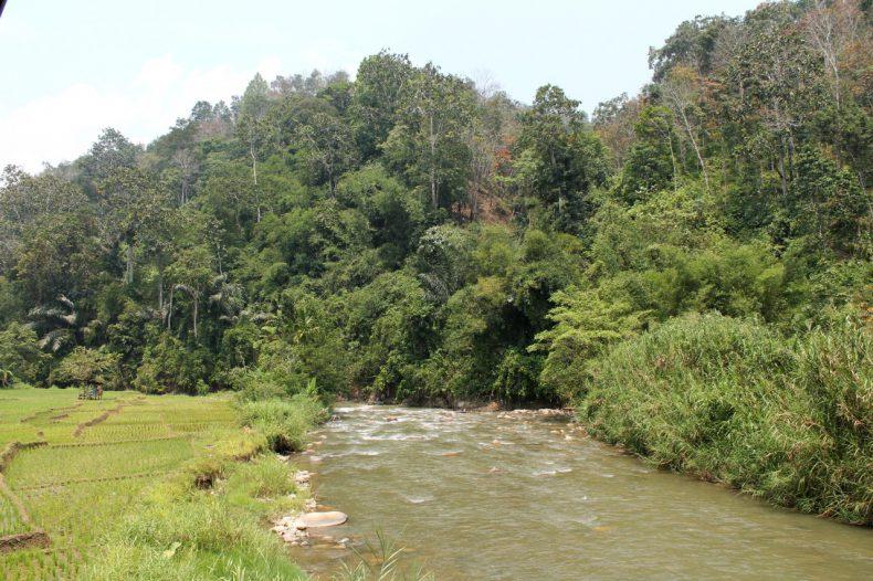 indonesie-sumatra-sipirok-bukit-tinggi