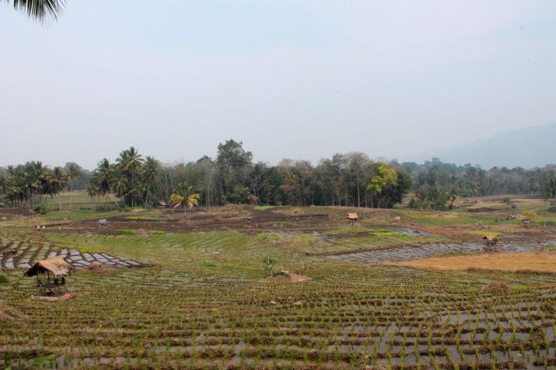 indonesie-sumatra-sipirok-omgeving