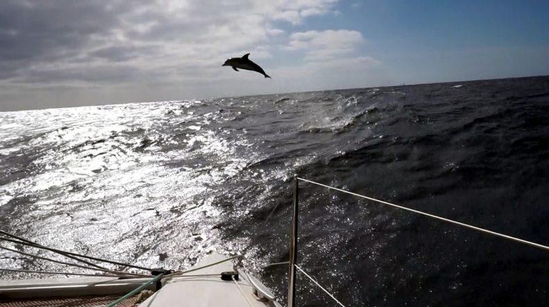 Atlantic-Crossing-Dolphine