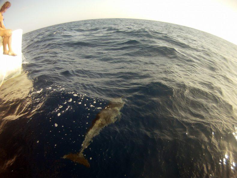 Atlantic-Crossing-Dolphine-Bow