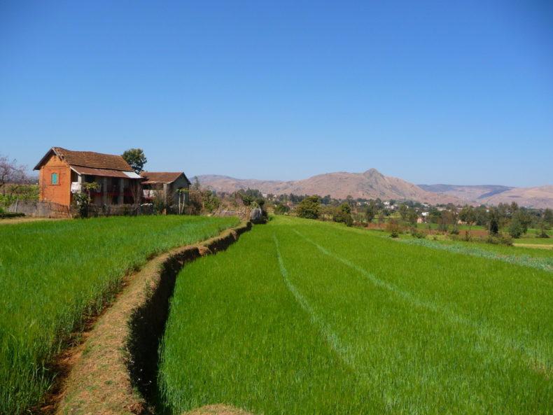Madagaskar-rijstvelden-Antsirabe