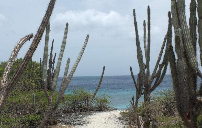Bonaire_Washington_Slagbaai_weg