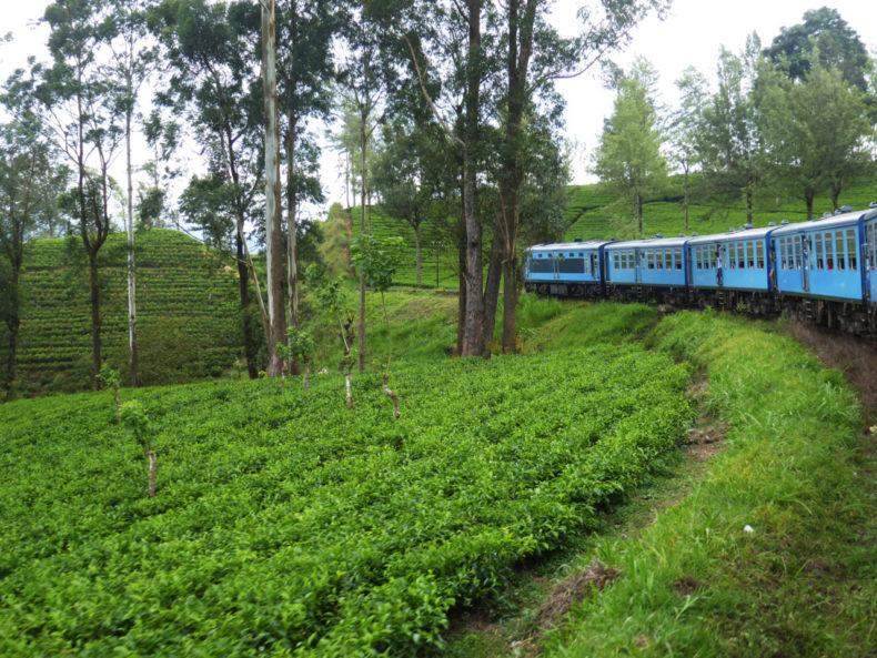 theeplantages-treinreis-sri-lanka