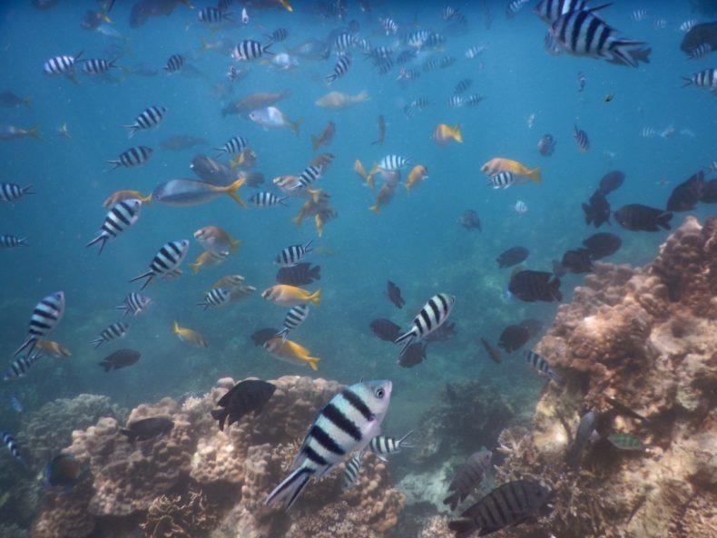 tropische-vissen