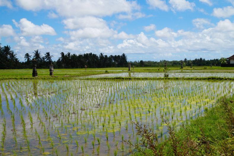 bali-unesco-rijstvelden-jatiluwi