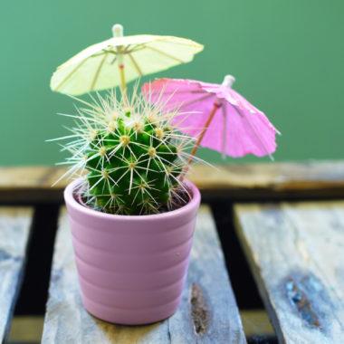 Reissfeer in je interieur met de ananasplant en andere kamerplanten