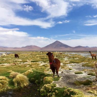 Rondreis Bolivia: een reisroute langs de mooiste Bolivia bezienswaardigheden