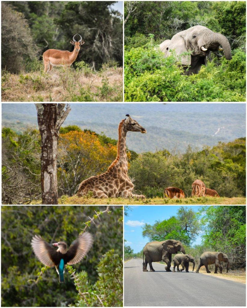 safari-zuid-afrika-bezienswaardigheden