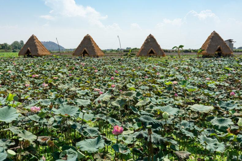 siem-reap-lotusboerderijen