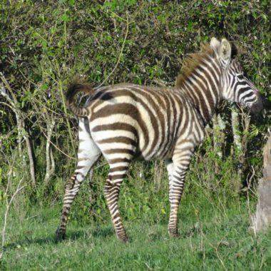 Vakantie Kenia: safari en meer highlights voor een rondreis Kenia