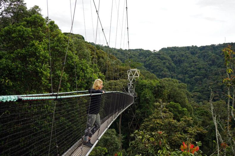 canopy walk nyungwe rwanda