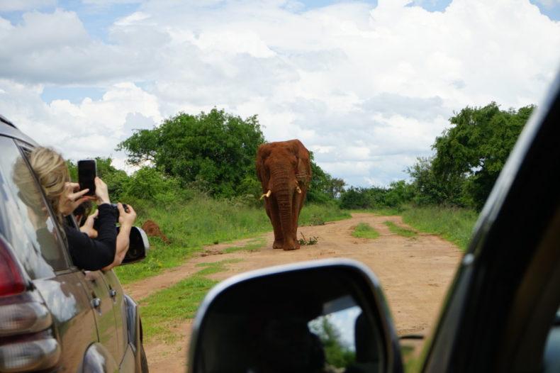 game drive rwanda