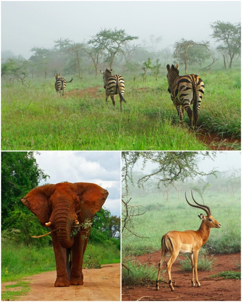 safari rwanda game drive akagera national park