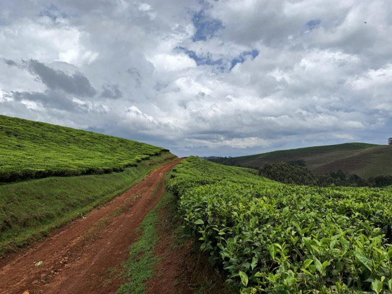 theevelden rwanda