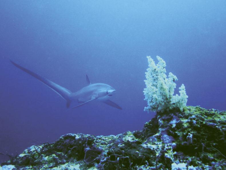 duiken Malapascua filipijnen